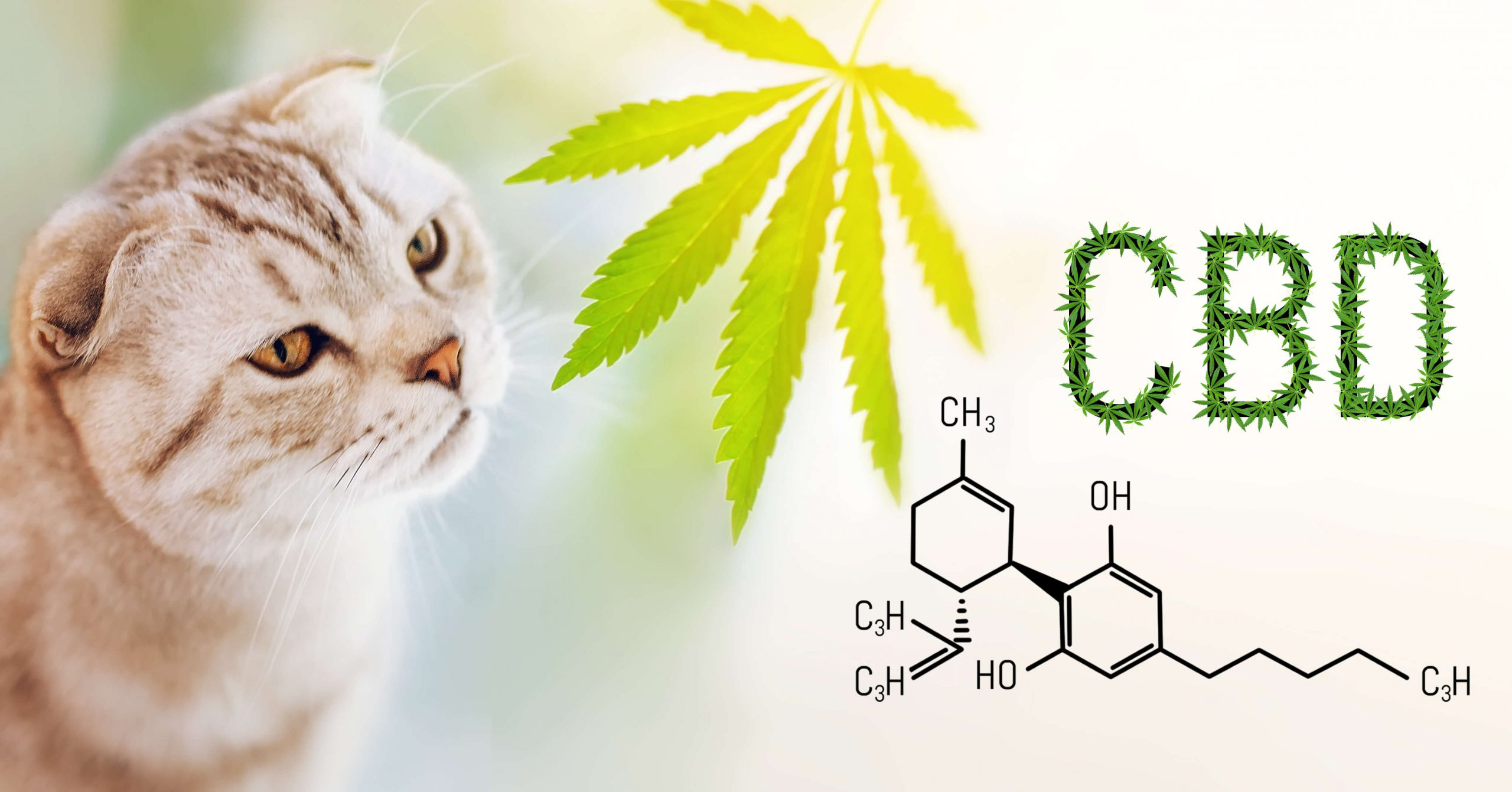 Is-cbd-oil-safe-for-cats-2