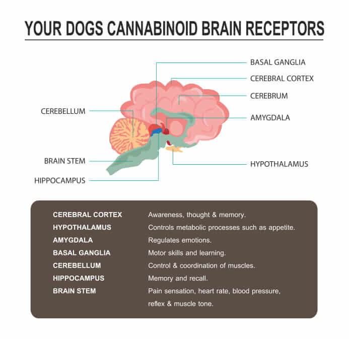 How-much-cbd-oil-should-i-give-my-dog-4