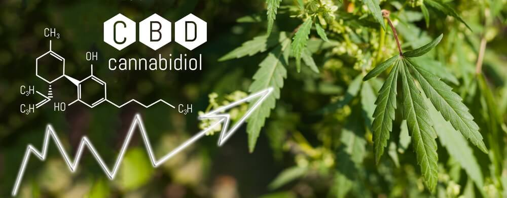 does-cbd-oil-get -you-high-3