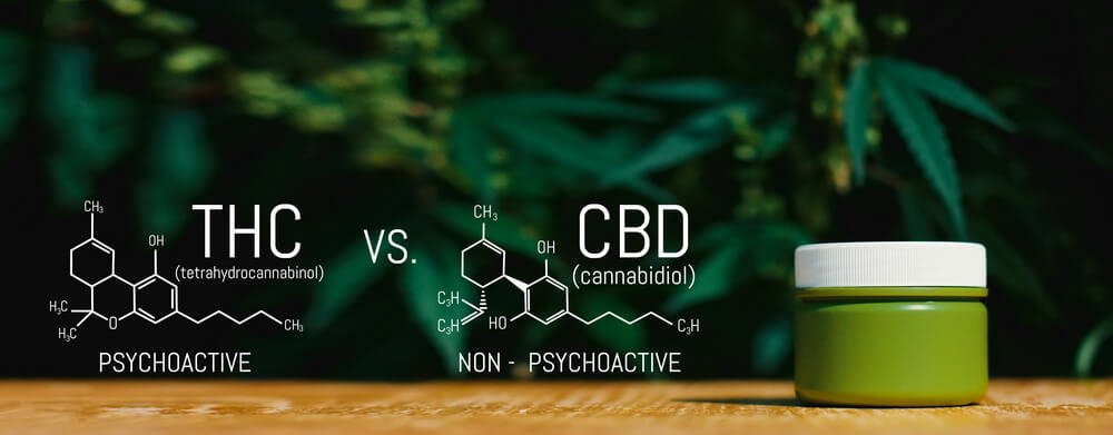 does-cbd-oil-have-thc-