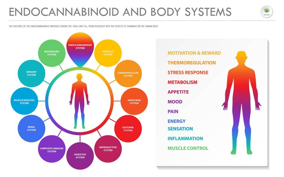 does-cbd-oil-have-thc-(2)