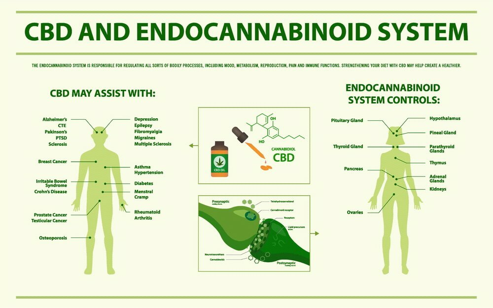 how-long-does-it-take-for-cbd-oil-to-work-1